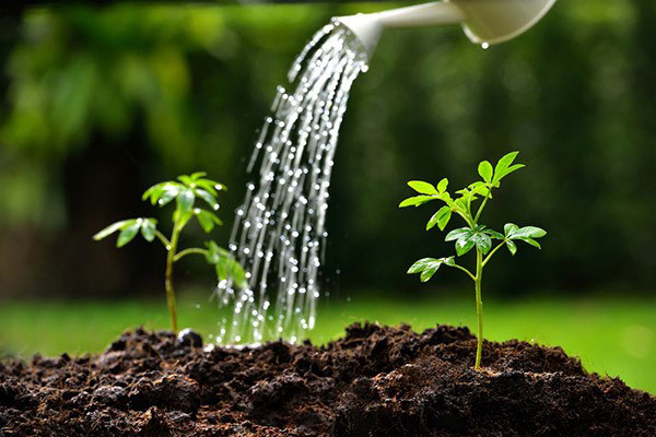 All plants need water. But how much and how often varies from plant to plant.