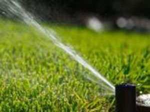 How much water are you putting on your lawn?