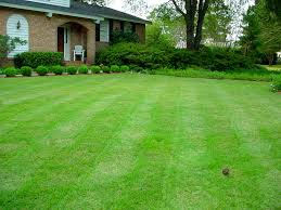 Our love affair with lawns