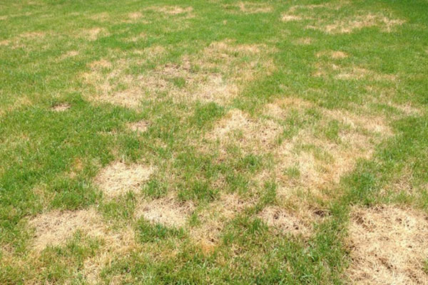 Simple, low-cost ways to win the battle against lawn fungal diseases