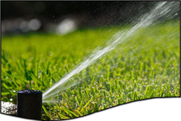 The basics of Water-Wise landscaping