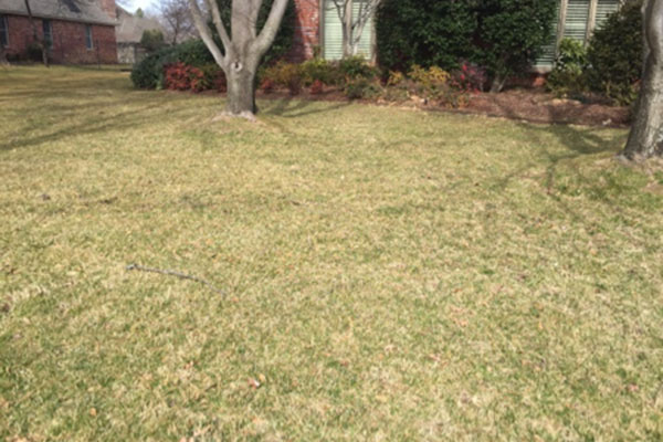 Watering lawns in fall and winter